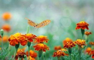 아름다운 꽃과 화사한 나비 이미지 모음