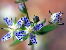 #계절의 향기로운 멋진 꽃들 #