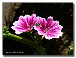 멋진 꽃들......