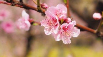 3월 꽃축제