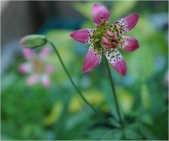 세상에서 가장 아름다운 꽃, 백합꽃
