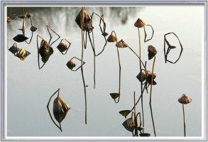 11월 마지막날 대자연의 신비 연밭의 향연