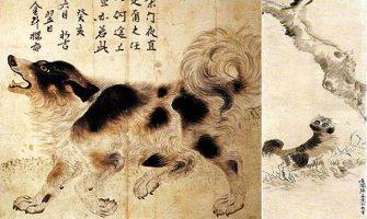 사회-일본에 학살돼 군용모피로 이용된 우리 개-삽살개