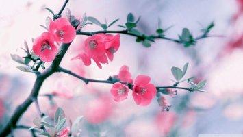 4월 컴퓨터 배경화면 - 예쁜 봄 배경화면