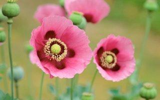 고화질 아름다운 꽃