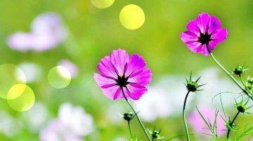 아름다운 꽃 풍경 #12