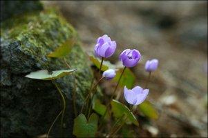 멋진 꽃 - 가장 멋진 인생이란