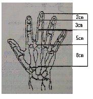 자연 속에서 볼 수 있는 피보나치 수열의 예