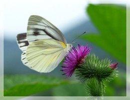 볼수록 신비롭고 아름다운 꽃들
