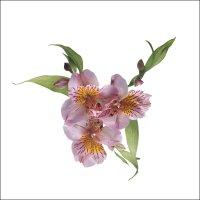 아름다운꽃 (하이퀄리티)1 31장---바탕화면 배경무늬용 (8)
