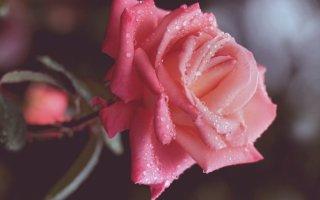 바탕화면 - 아름다운 꽃
