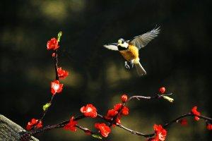 봄날...멋진 꽃 비행...!