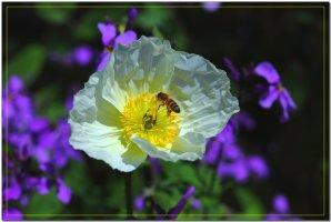 멋진 꽃 이미지
