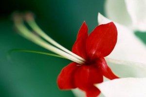 아주 멋진 꽃들