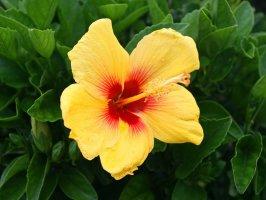 아름다운 꽃 배경화면입니다.