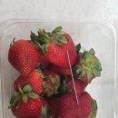 바늘 딸기 용의자 체포