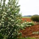 요즘 정말 아름다운 스페인 고산의 꽃이 있는 풍경