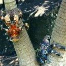 코코넛 크랩