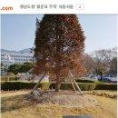 농담인가 했는데 진짜인 홍준표와 홍준표의 불길한 나무 ㅋㅋㅋ