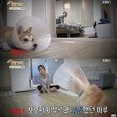 """강형욱 """"강아지는 주인과 헤어지면 자기가 실수로 놓쳤다고 생각해요"""""""