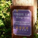 나무야 나무야