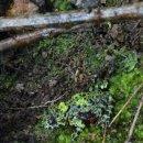 무당개구리--무당개구리과