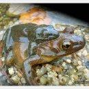 은희광사진가와 산개구리 개구리과이야기 270.