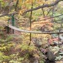 가을 단풍이 좋은 <b>자연</b><b>휴양림</b> 10곳