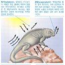 논술형) - [동물행동, 생태] 체온의 가변성, 변온동물, 항온동물, 동물과 환경...