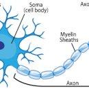[딥러닝 기초] 신경망(Neural Network)에 대하여
