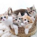 [핑쿠젤리]엄마가 된 고양이 지디.