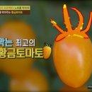 [천기누설]최고의 항산화식품,황금토마토