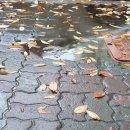 광주 날씨 : 비 내리는 오후