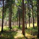 <b>산림청</b> 규제 혁신 <b>자연</b><b>휴양림</b> 임업기계장비 산지전용 등