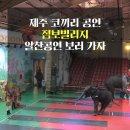 제주 코끼리 공연 점보빌리지 알찬공연 보러 가자