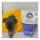 기력없는 강아지 영양식 챙겨주기 : <b>언더</b><b>더</b>웨더