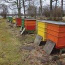 라트비아 사람들은 꿀벌과 양봉에 열정적 [프랑스아카데미]