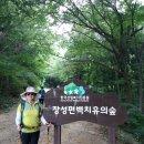 180811.축령산 편백나무숲 산행 사진입니다