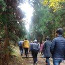 민주주의 곶자왈 전체주의 삼나무숲 - 거문오름