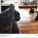 [적묘의 고양이]무채색자매,무궁화꽃이 피었습니다. 밀당귀재.13살,14살 고양이