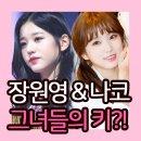 아이즈원 장원영 키, 야부키 나코와 무려 20cm 차이!