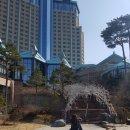 하이원 강원랜드 카지노 구경 후기