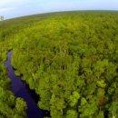 칼리만탄 숲의 오랑우탄