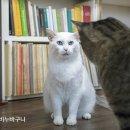 고양이 두 마리가 누구에게나 진리는 아니다