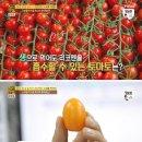 [천기누설]노화를 막아주는 황금토마토 효능과 섭취방법