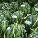 수박 고르는 법, 무더운 여름 맛있는 수박 고르는 요령