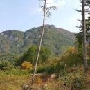 평창 소나무 국유림접 독립적 공간 힐링조망 수련원 요양원 펜션부지(2천평,7억5천)