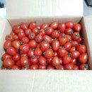 강아지자연식 - 토마토스튜