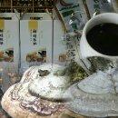 말굽버섯 효능및 도.소매 판매