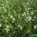 강렬한 꽃들이 빛나는 스페인 고산평야의 들판